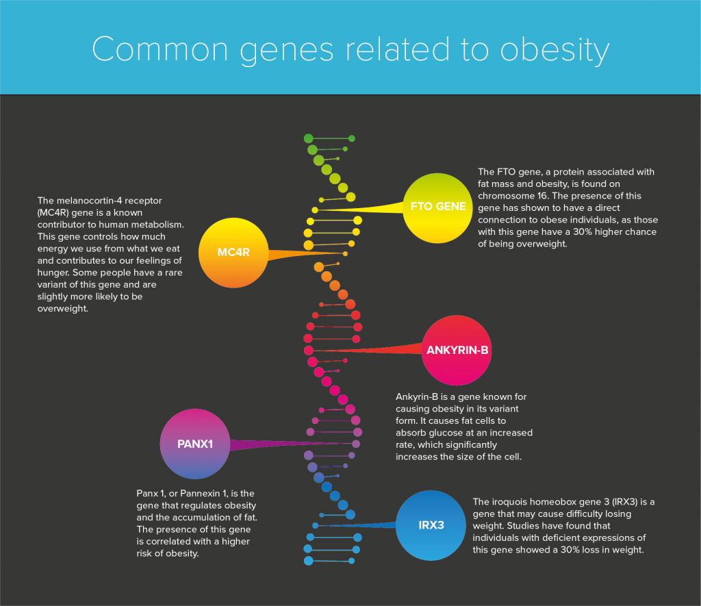 Infographic showing which genes are related to obesity